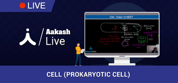 Cell prokaryotic